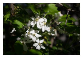 landscape macro nature naturephotography spring