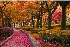 autumn swag orange beautiful garden freetoedit