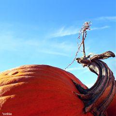 freetoedit pumpkin autumn againstthesky myoriginalphoto