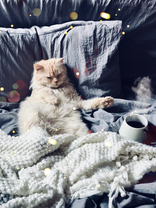 #cat #coffee