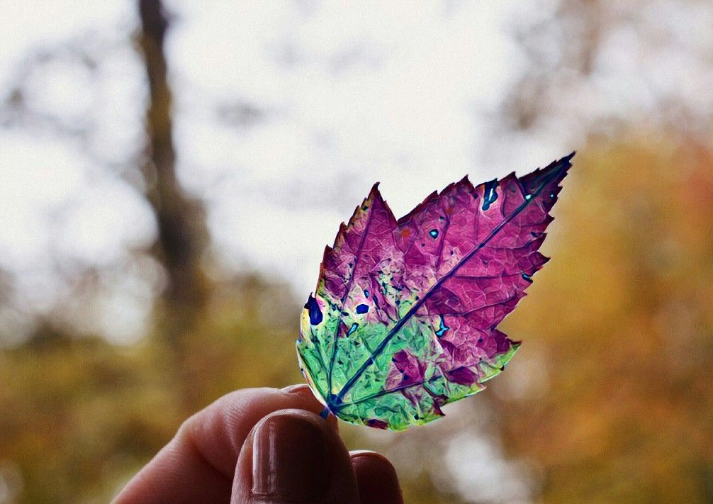 Have a nice evening #magiceffect #hand #autumn #leaf