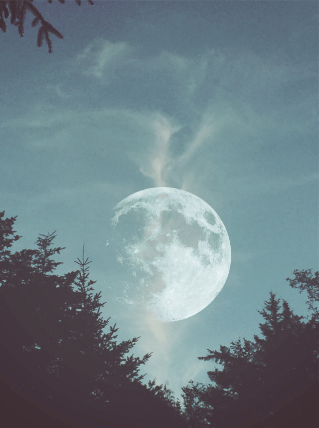 #freetoedit #moon #photography #sky #tree #clouds