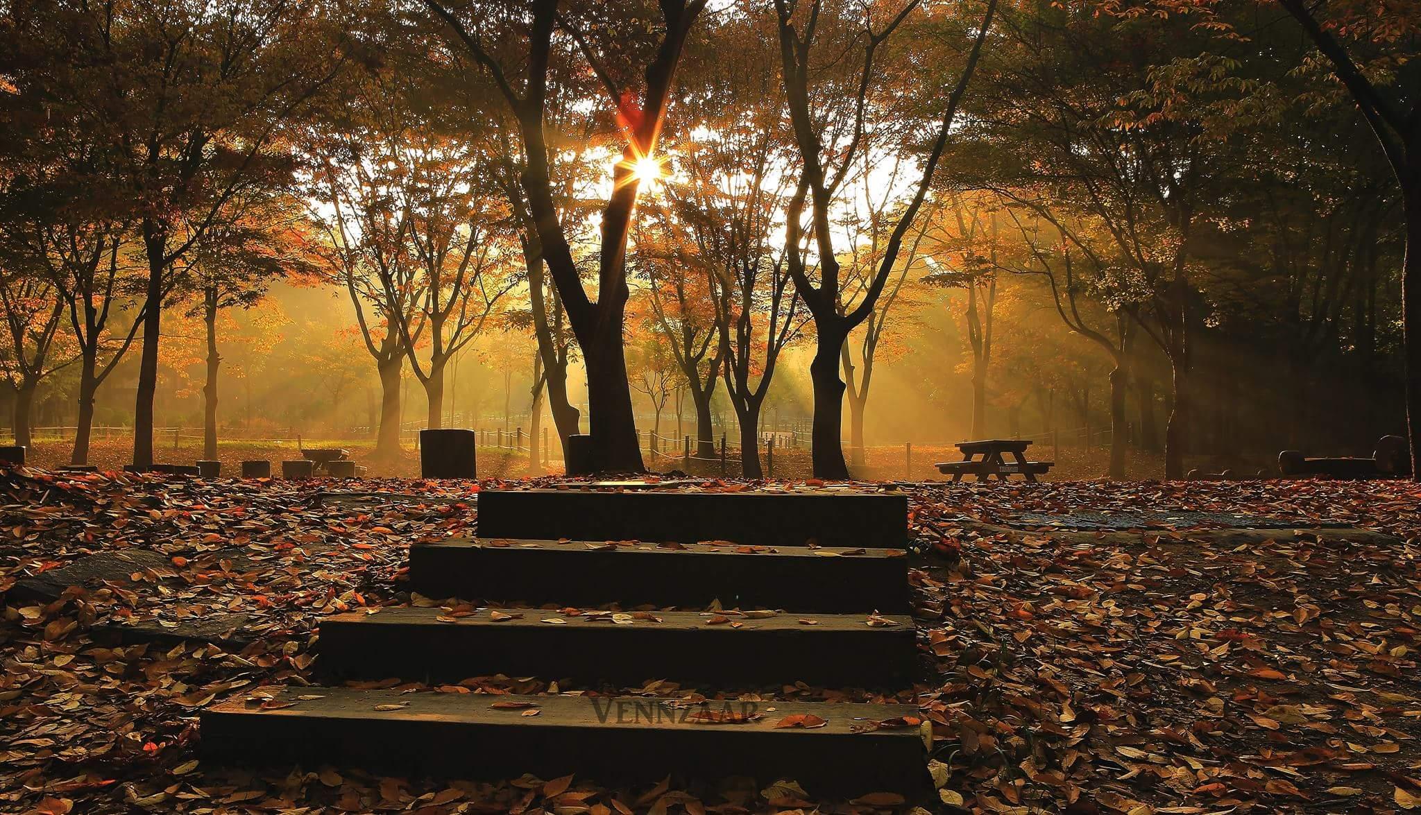 Incheon South Korea Sunrise Forest Autumn Sunrise L