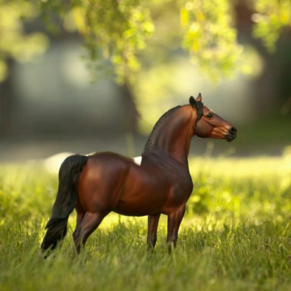 правильной картинки лошадей брейер на природе фотографии