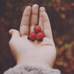 freetoedit autumn dogrose