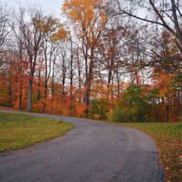 freetoedit fall autumn trees orange
