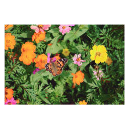 butterfly flowers blossom bloom autumn freetoedit