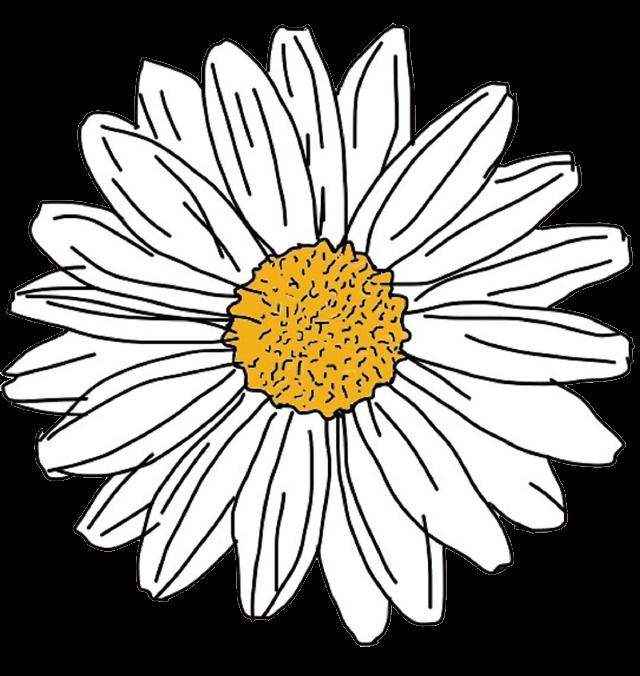 Есенина добрым, ромашки картинка стикер