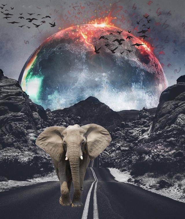 #freetoedit #birs #elephant #wow #cool #like #apocalypse #planet #moon #fire #earth #mountains #interesting #photography #sky #snow #travel #doroga #lol #