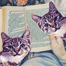 freetoedit cats watchme imhere reading