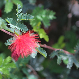 flower tree naturephotography