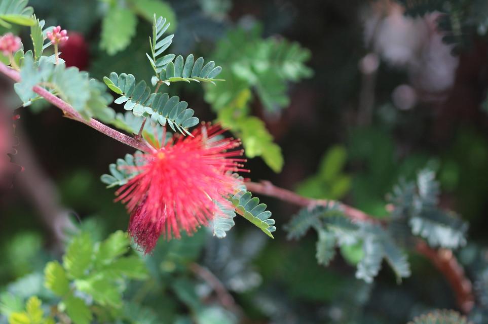 #flower #tree #naturephotography
