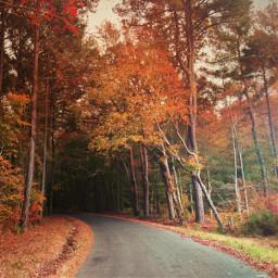 autumntrees roadtowhere freetoedit myoriginalphoto