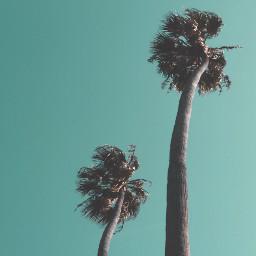 california travel photography interesting palmtrees