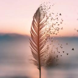 feather feathers nature remix freetoedit