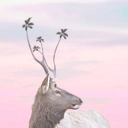 moose palmtrees trees remix freetoedit