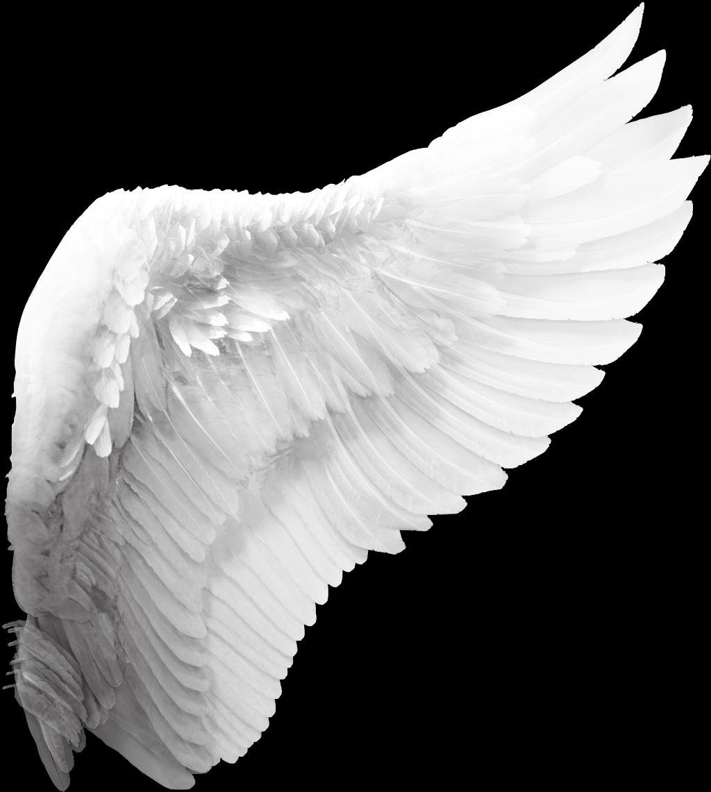 Офигенные, картинки крыло ангела