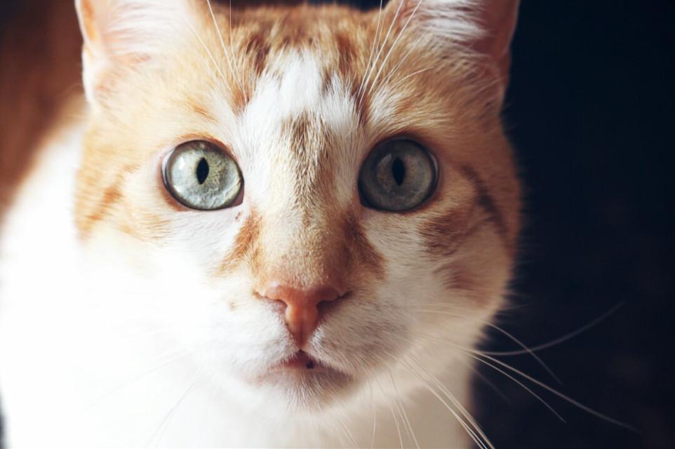El pequeño de la casa #cat #eyes #blueeyes#photography