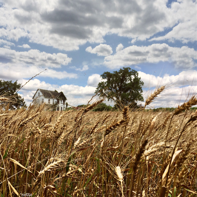 #dpcfields #fields #myoriginalphoto