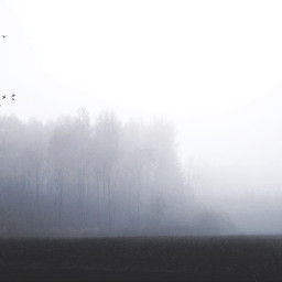 freetoedit birds escapes treesoflife