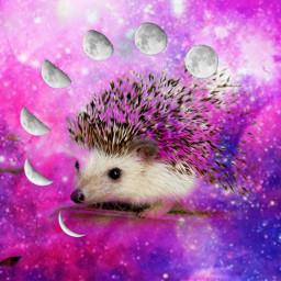 freetoedit galaxysticker hedgehog remixit