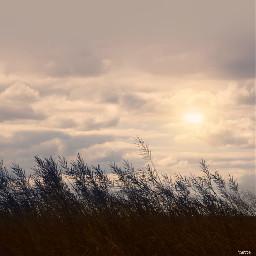 freetoedit sunset silhouette grasses myoriginalphoto