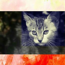 freetoedit kittylover
