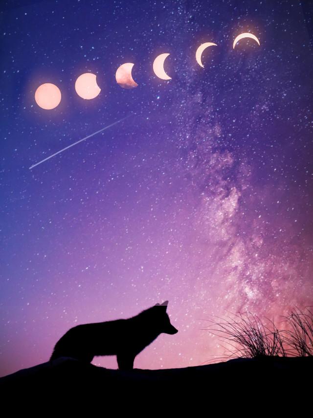 Wolf. #wolf #sky #stars #moon #eclipse @niel86 @ria40
