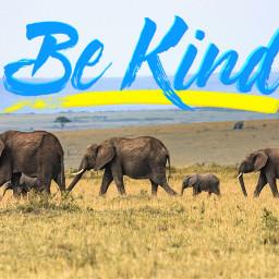 elephantliferemix nature natural wildlife animals freetoedit