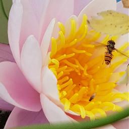 dpcfavplant favplant freetoedit flowers nature