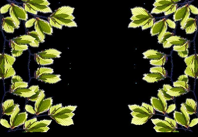 #nature #greenleaves  #leaves #tree
