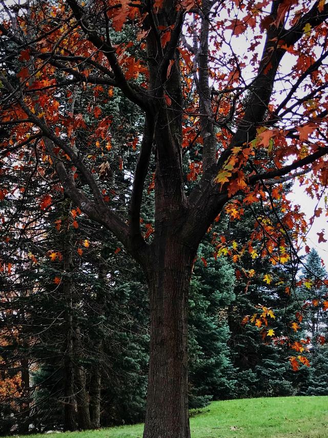 #freetoedit #trees #fall #nature
