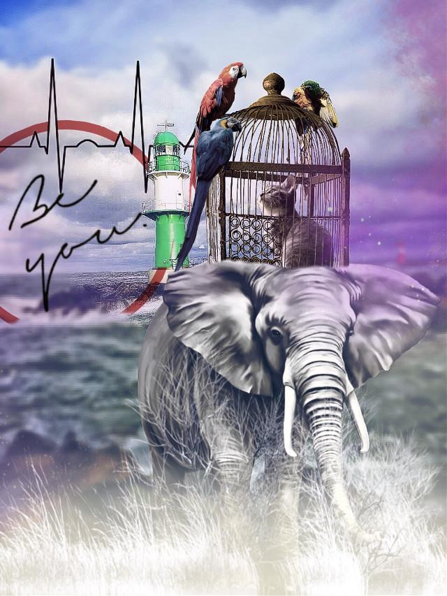 #vipshoutout to @christakuska and her wonderful #gallery #freetoeditimage #checkherout #vip #shoutouts #lighthouse #ftestickers #elephant #beyou #quote #madewithpicsart #myremix #remixed #remixit #editit    #freetoedit