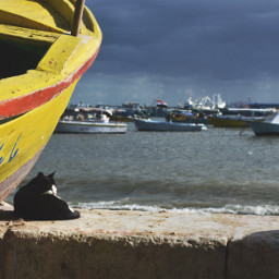 sea cat drama sky nature