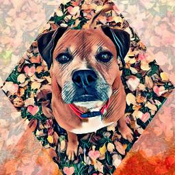 freetoedit cutie dog outdoors lovepicsart