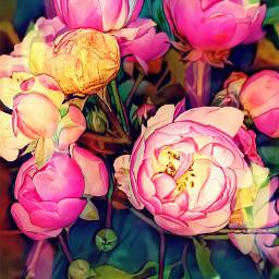rosespink november2017 flower magiceffect artisticeffect