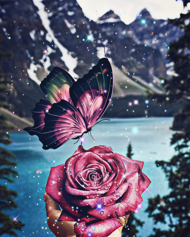 #freetoedit #rose #butterfly #surreal