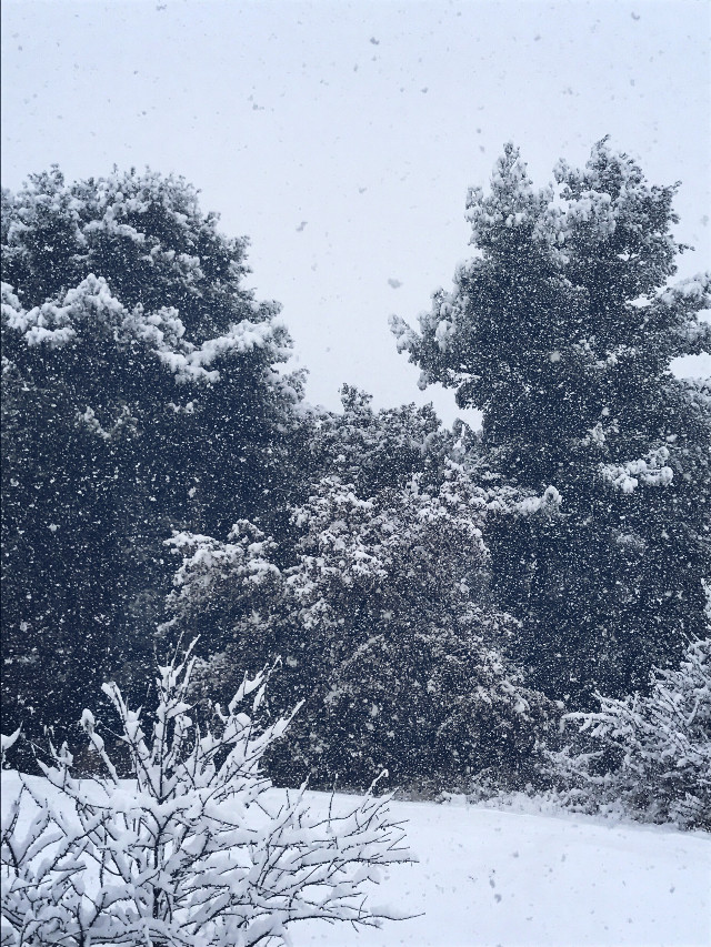 #freetoedit #snowstorm #France #nature #white