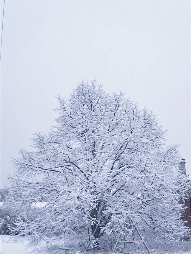 #freetoedit #white #snow #tree