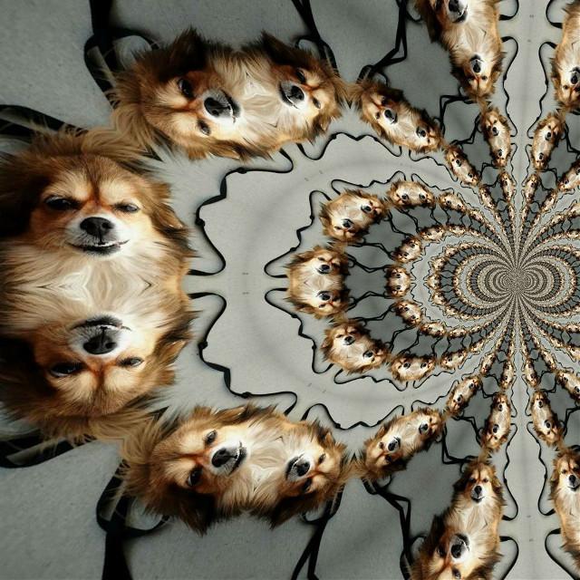 #weird#trippy#mixedmediaart#digitalart#photography#ilovemydog#mydog