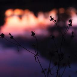 photography photo photographer photooftheday sunset freetoedit