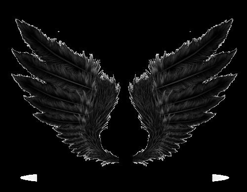#wings #feathers #wing #bird#freetoedit