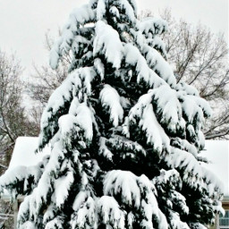 freetoedit pcitssnowing itssnowing winter snow pcwinterparks pctrees pcbadweather pcsnow pcoutdoorwinter