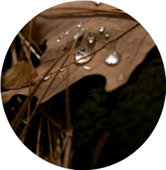 leaf brown droplet water grass freetoedit