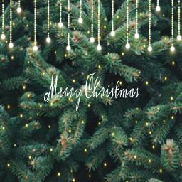 freetoedit. christmas lights holliday pinetrees freetoedit