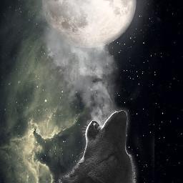 freetoedit wolf moon universe night
