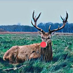 freetoedit whiteicemagiceffect hdreffect rudolphtherednosedreindeer reindeer