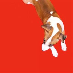 freetoedit dog dogs doglover bullterrier