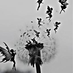 freetoedit fairies silhouette remixit