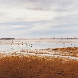 freetoedit flockofbirds sunrise nature sea